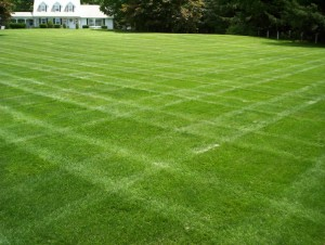 lawncare-1024x773