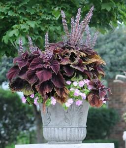 plantsample2